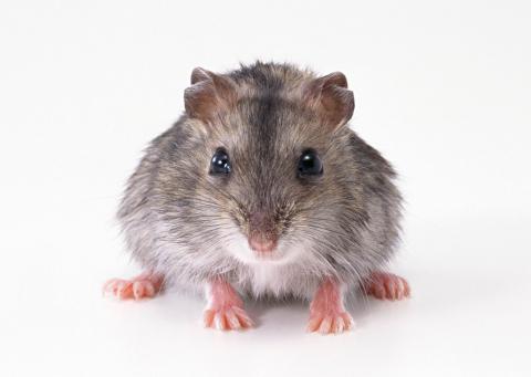 Prévenir la présence de souris dans la maison