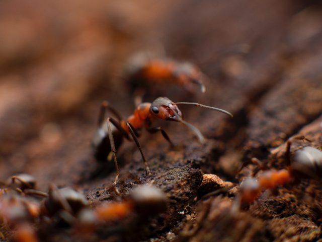 Rénover sa maison et se faire surprendre par des parasites : que faire?